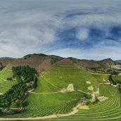 A reservoir of fresh fragrance (Bosung Green Tea Field)