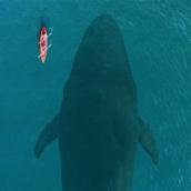Whale2 [LG Home+]