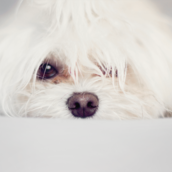 Puppy [LG Home]