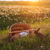 Rabbits at sunset wallpaper